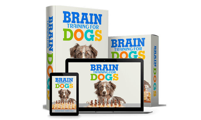 Brain Training for Dogs featured image