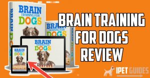 Brain training for dogs review featured image