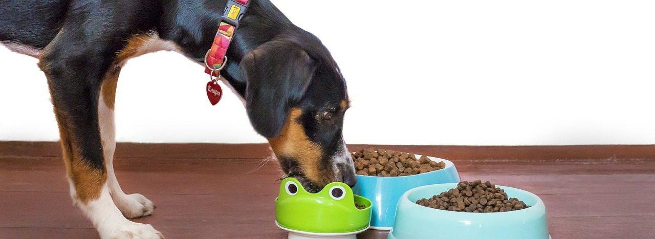 A dog eating Kibbles