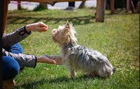 A-girl-training-a-puppy