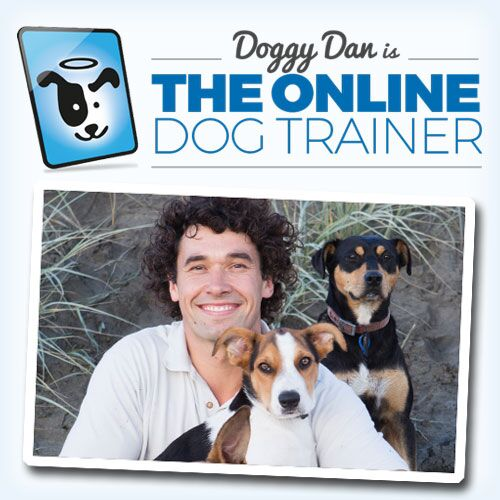 teach your dog puppy training