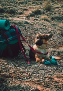A German Shepherd and Camping bag in a Mountain
