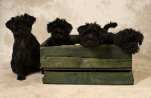 Puppies inside a crate