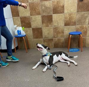 petsmart dog training image