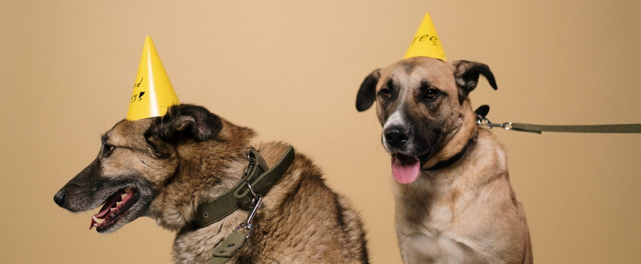Socialized two dogs
