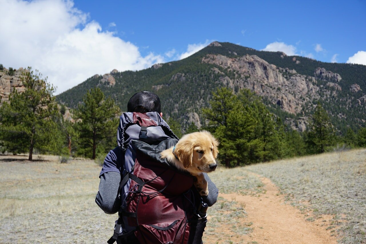 best dog backpack for hiking cover image
