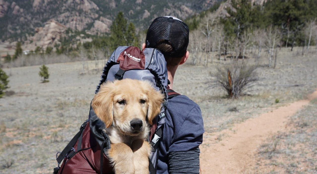 A man hiking with a dog on backpack