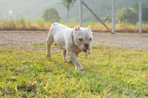 how to potty train a pitbull puppy cover image