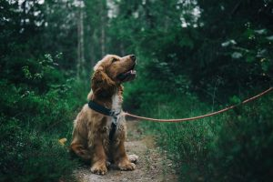 puppy socialization Featured image