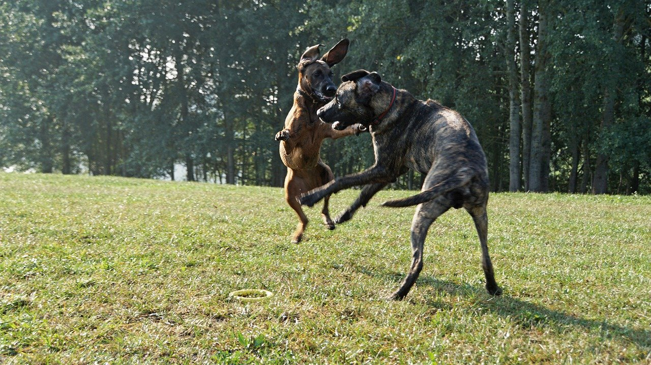 Two dogs fighting