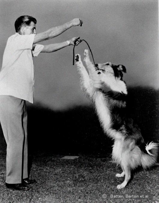William koehler Dog trainer