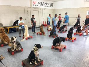 training dogs in sit means sit class
