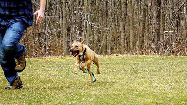 Dog Chasing a Man